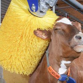 Обладнання для тваринницьких ферм