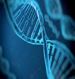 Генетична робота в господарстві з найкращим європейським партнером